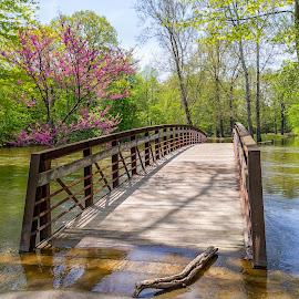 Flooded beauty by Tammy Scott - Buildings & Architecture Bridges & Suspended Structures ( waterscape, nature, nature up close, flooding, river, bridge, trees, landscape, nature photography )