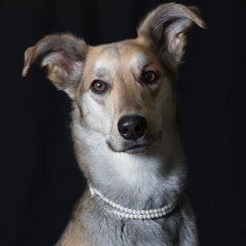 Pretty in Pearls by Krista Allen - Animals - Dogs Portraits ( mixed breed, scout, pearls, portrait )