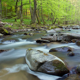 by Siniša Almaši - Nature Up Close Water ( water, stream, colors, green, forest, landscape, woods, depth, nature, trees, view, stones, rocks, mist, river )