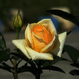 Holy Light ! by Debartist Lightpainter - Flowers Single Flower