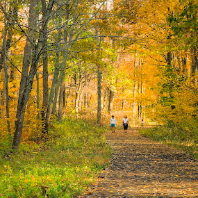 Woodland Stroll by Fran Gallogly - Landscapes Forests ( orange, autumn, foliage, path, woodland, leaves, strollers, landscape, pwcpaths )