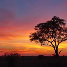 BURNING SKY by Issi Potgieter - Landscapes Sunsets & Sunrises ( satara, kruger national park, south africa, sunerise )