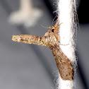 Yoga Moth