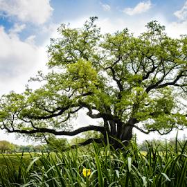 by Judy Rosanno - Nature Up Close Trees & Bushes