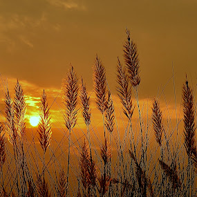 Golden Leaves by Gourab Mitra - Nature Up Close Leaves & Grasses ( sunset, fall, gold, leaves, pwcfallleaves-dq )