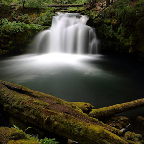 Serenity by Dennis Ducilla - Nature Up Close Water ( water, oregon, green, waterfall, trees, duicilla, slow, ferns, soft )