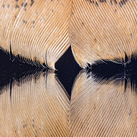 Feather on Mirror by Carl Albro - Abstract Patterns ( common elder, ducks and geese )