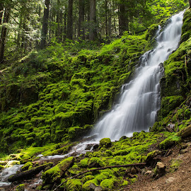 White Branch Falls by Mats Nordgren - Landscapes Waterscapes ( water, green, creek, waterfall, moss, white branch falls )