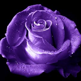 by Ad Spruijt - Flowers Flower Gardens