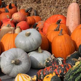 various pumpkins by Carola Mellentin - Food & Drink Fruits & Vegetables (  )