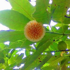 by রাত জোনাকি - Nature Up Close Gardens & Produce