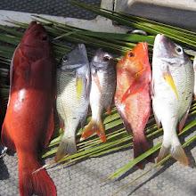 Spring Seafood Feast