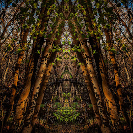 Fractal Forest by Brandon Montrone - Digital Art Things ( abstract, mirrored reflections, mirror, mirrors, reflection, tree, miirimage, digital art, trees, symmetry, fractal )