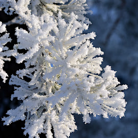 Beauty of Winter by Doru Sava - Nature Up Close Other Natural Objects