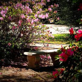 Park bench by Brenda Shoemake - City,  Street & Park  City Parks