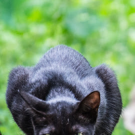 Magic black by SAJEEV ABRAHAM - Animals - Cats Portraits ( cat, watching, pet, green, black, shiny,  )