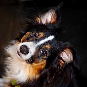 by Annette Turner - Animals - Dogs Portraits