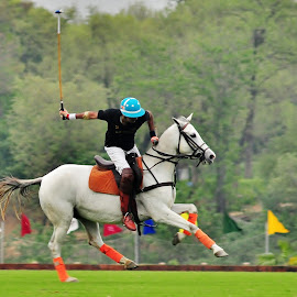Polo by Arsalan Sandhila - Sports & Fitness Other Sports ( horse, sports, polo, games, kings, rider )