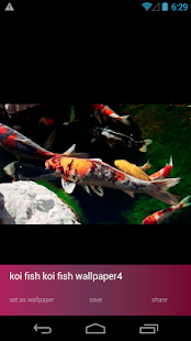 Koi Fish Wallpapers - screenshot