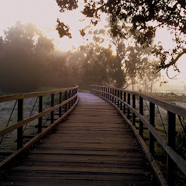 Misty Morning Walk by Perla Tortosa - Instagram & Mobile Other ( fog, yarra valley, bridge, walk, misty,  )
