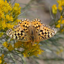 Great Basin Fritillary