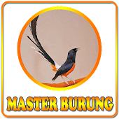 Download  Kicau Master Burung  Apk