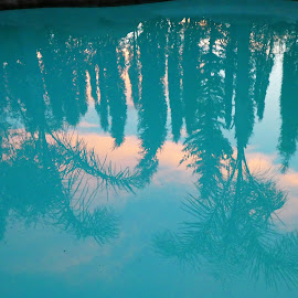 Sunset reflection in a water by Svetlana Saenkova - Nature Up Close Water ( water reflection, blue, palm, blue and pink,  )