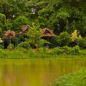 Green Peace by Ashikur Rahman - Landscapes Travel ( park, green, kit lens, trees, nikon d5000 )