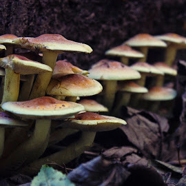 by Mike Ross - Nature Up Close Mushrooms & Fungi