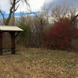 sitting in nature by Amber O'Hara - Landscapes Prairies, Meadows & Fields (  )