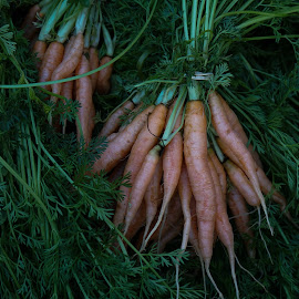 Baby Carrots by Victor Mirontschuk - Nature Up Close Gardens & Produce ( farmers market, nature, green, carrots, nyc, places )