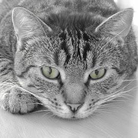 The cat by Łukasz Pokiński - Animals - Cats Kittens