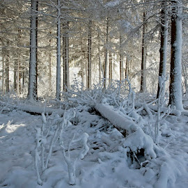 My light that guides me by Siniša Almaši - Nature Up Close Trees & Bushes ( natural light, up close, tree, nature, snow, white, landscape photography, trees, forest, view, landscape, light, depth )