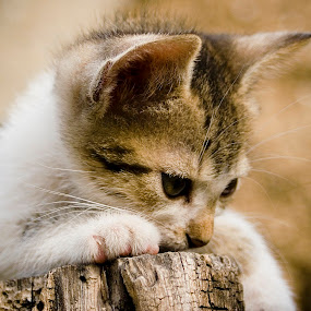 by Alex D.  Veriga - Animals - Cats Portraits