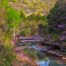 Sweet Spot by Michael Buffington - Landscapes Forests ( stream, colorful, green, forest, redbuds, yellow, spring, chartreuse, environment, magenta, nature, blue, color, natural )