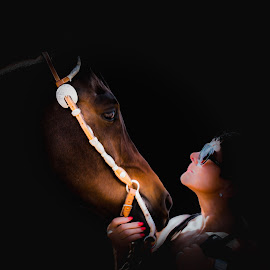 The connection by Lloyd Lande - Animals Horses ( arabian horse, horse, show horse, lady )