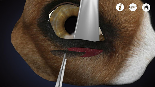 Ophthalmology in Dogs - screenshot