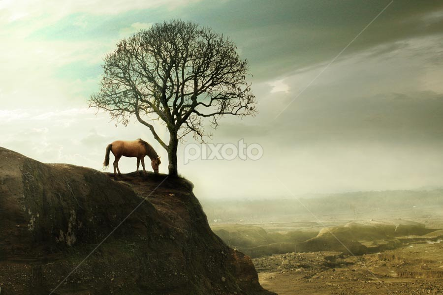 when all has passed by Budi Cc-line - Landscapes Travel ( horse, landscape, alone )