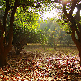 An autumn morning... by BhanuKiran BK - Nature Up Close Trees & Bushes ( fall leaves on ground, dry, autumn, fallen, dry leaves, fallen leaves, morning, leaves )