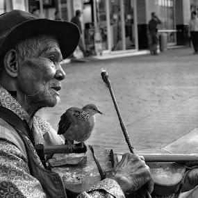 El Duo  by Aditya Nugraha - People Musicians & Entertainers ( street musicians, violinist )