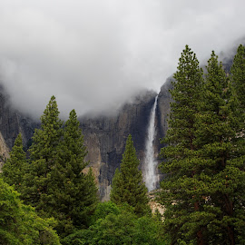 Yosemite Falls by Gannon McGhee - Landscapes Mountains & Hills ( clouds, mountains, park, yosemite, national, clearing, falls, weather, trees, storm, pine )