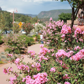 Pathway to Paradise by Ted and Nicole Lincoln - City,  Street & Park  Neighborhoods ( path, flowers, plants, pathway, sedona )