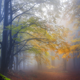 Thrill of forest by Adrian Urbanek - Landscapes Forests