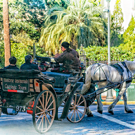 horse and carriage by Lennie Locken - Transportation Other