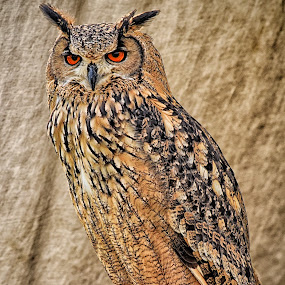 by Marco Bertamé - Animals Birds ( bird of prey, feathers,  )