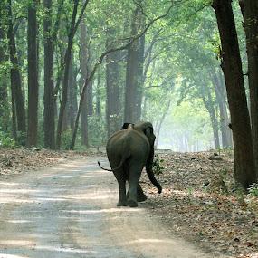 by Anindya Sengupta - Animals Other Mammals