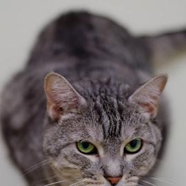 Without a home, Karina by Daniel Jansen - Animals - Cats Portraits ( cat, cuddly cat, cat portrait, cat sanctuary, cat rescue, feline )