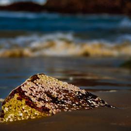 Close-up by Mahul Mukherjee - Nature Up Close Rock & Stone ( sea beach, sea shell, wave, sea, boulder )