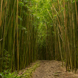 Bamboo Forest by Warren Fintz - Landscapes Forests ( #adventure #bamboo #forest #path #green #life #perspective #peaceful #landscape #photography )