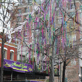 St Charles St.  Tree of Beads  by Shari Linger - City,  Street & Park  Historic Districts ( new orleans, night parades, tree of beads, fat tuesday, historic district, st charles street, mardi gras )
